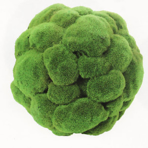 green-moss-ball