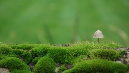 green_landscapes_nature_moss_m37615