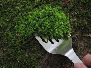 moss-collecting
