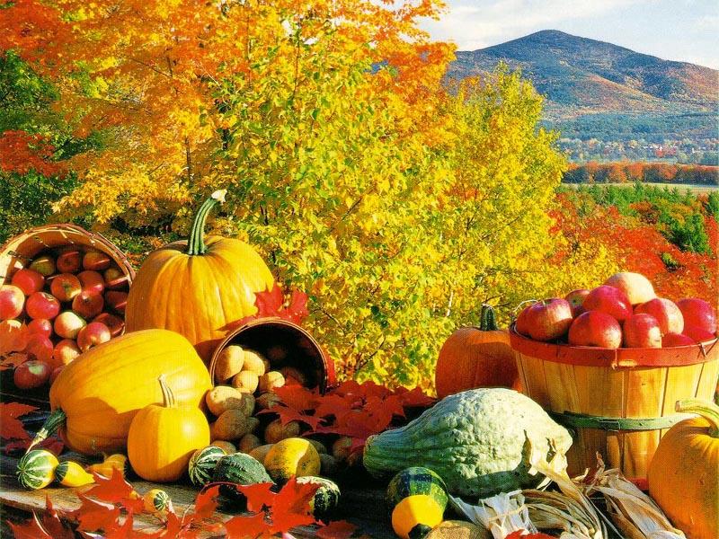 fall-harvest